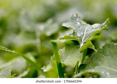 Rain drops resting on the surface of a leaf.