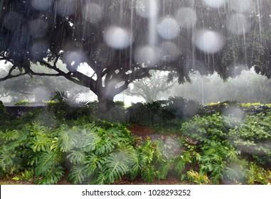 Rain falling in Hawaii
