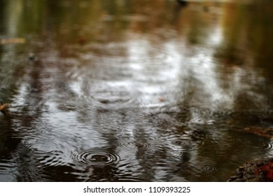 Rain falling on calm water leaving ripples in the water.