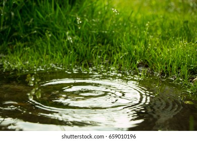 Rain falling in the puddle and circles on the water from drops of water on a background of green grass, a summer day in the Garden