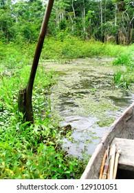 Rain forest, Amazon area, Peru