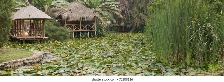 Rain Forest  amazonas river peru