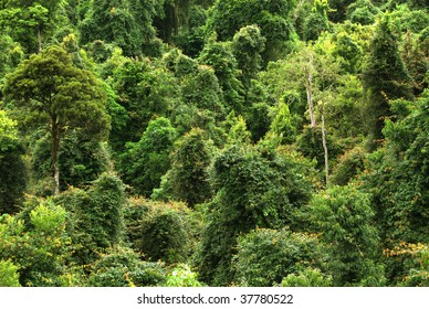 rain forest canopy in New South Wales, Australia