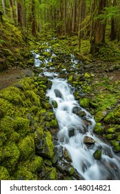 Rain Forest and Cascades along Sol Duc Falls Trail