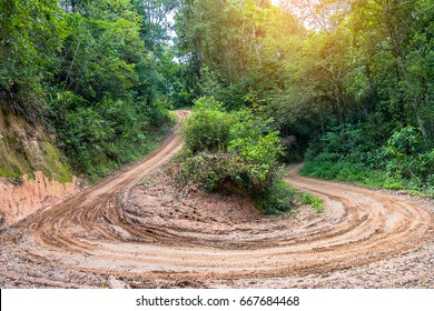 Rain Forest With A Dirt Road