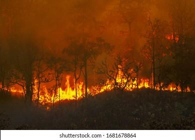 Waldbrandkatastrophe in Regenwald brennt durch Menschen