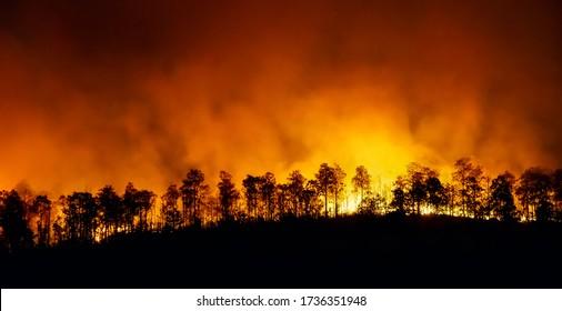 熱帯雨林火災は、人間によって引き起こされている