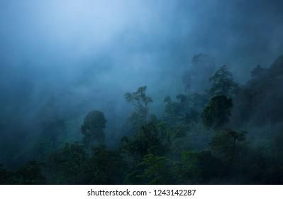 rain forest and fog