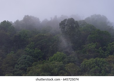 Rain forest and fog in early morning