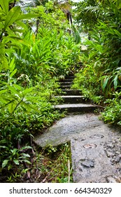 Rain forest foliage covering stairs and trail