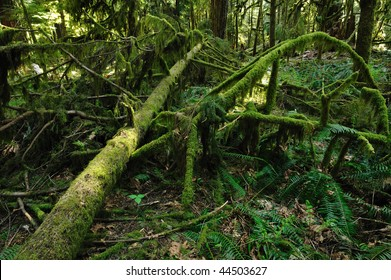 Rain forest at the gowlland tod provincial park, victoria, british columbia, canada
