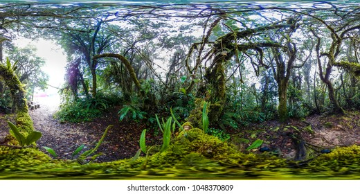 Rain Forest hiking trail in 360 Panorama