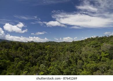 Rain forest in Kuranda Australia