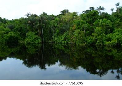 Rain forest mirrored in waters, on Rio Negro in the Amazon River basin, Brazil, South America