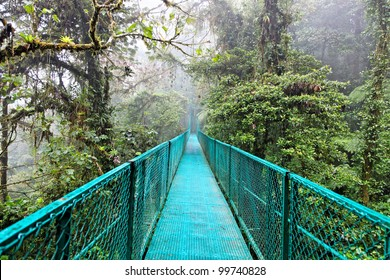 Rain forest in Monteverde, Costa Rica, Central America