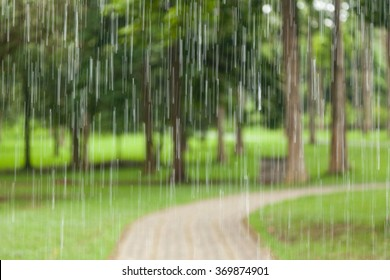 rain in the forest, the natural background and texture. Blurred abstract image.