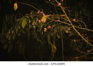 Rain Forest At Nightt In Alishan National Scenic Area, Taiwan. The Alishan National Scenic Area Is Mountain Resort And Nature Reserve. Image For Templates, Placards, Banners, Presentations.