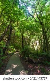Rain Forest, outside Waitomo Cave, North Island, New Zeland