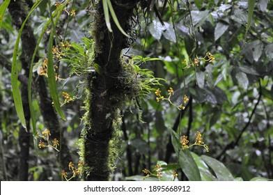 Regenwaldpflanzen Südamerika