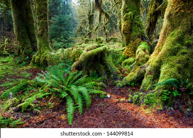 Rain forest in spring, Olympic national park, WA