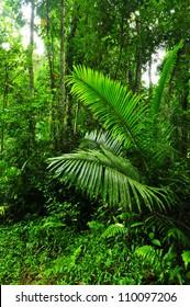 Rain forest in thailand
