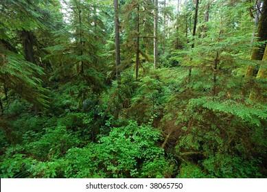 rain forest vegetation