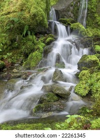 rain forest waterfall