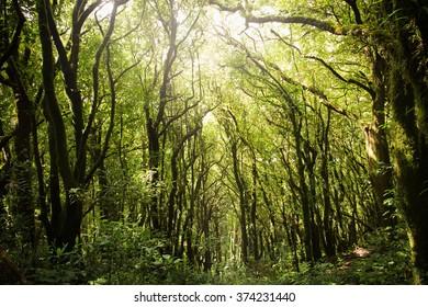 Rain forests in Thailand