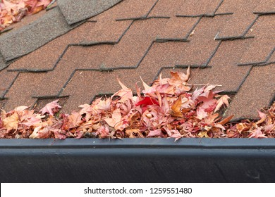 Rain gutters on roof without gutter guards, clogged with leaves, sticks and debris from trees. Increased risk of clogged gutters, rusting, increased need for maintenance and is a potential fire hazard