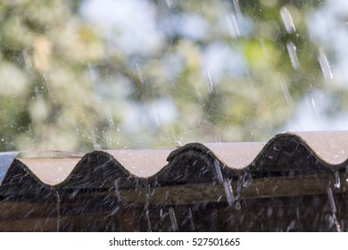 rain hit the roof in nature