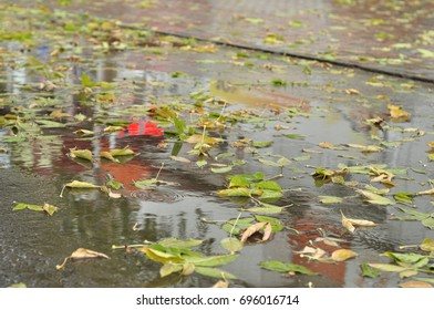 Rain, leaves and puddles.