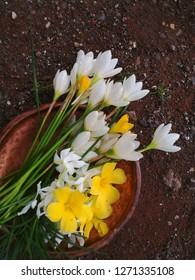 Rain lily, Damiana and Crepe jasmine (pinwheel flower) flowersin dish and land background.