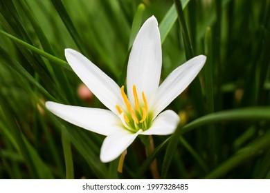 Lily Inan