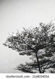 rain miror thetree