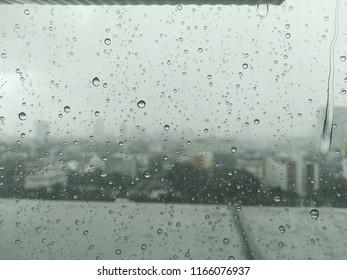 rain miror thrtree and city