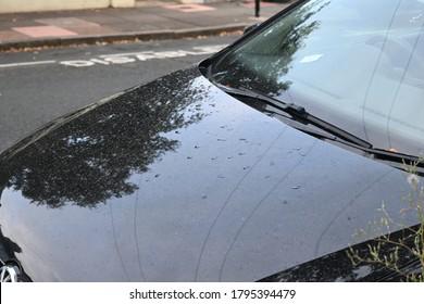 Rain on a Car bonnet