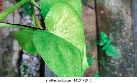 Rain on leaves green coler