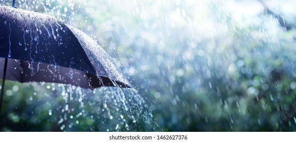 Rain On Umbrella - Weather Concept