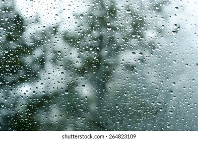 Rain on Window with Trees