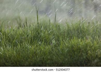 rain over green grass