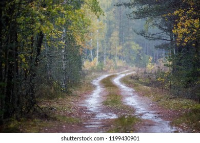 Rain road way path in forest