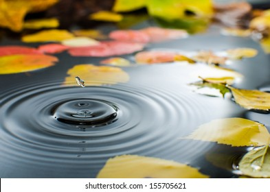 Rain splashing into a pond in the fall