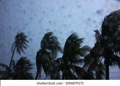 rain storm with coconut tree ,rain drop on car mirror ,shoot inside the car