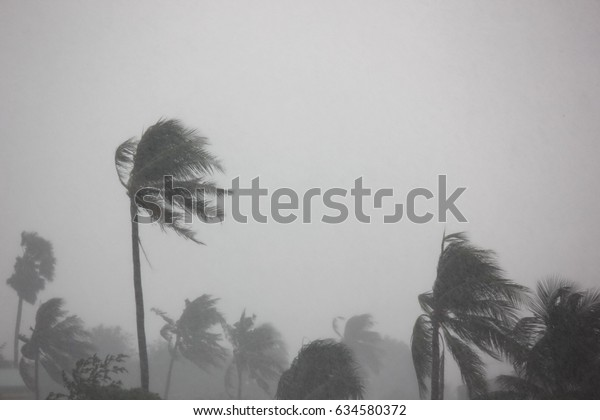 rain storm impact coconut tree,strong wind with gray sky before tornado,typhoon,or hurricane come.