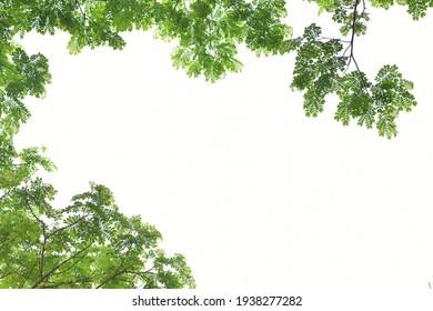 Rain Tree leaf frame background