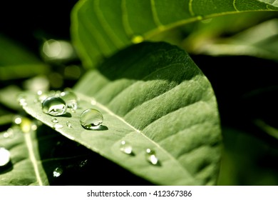 Rain water drops on green leaf