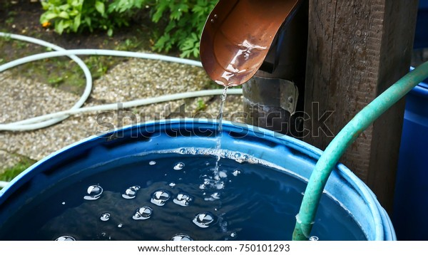 Rain Water Is Streaming into Barrel in the Garden.