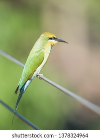Rainbow bee-eater bird perched on fence on a sunny day in Darwin, Australia