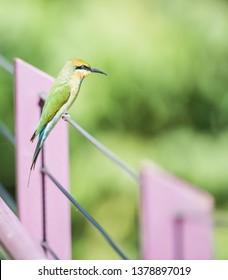 Rainbow bee-eater bird perched in profile on fence on a sunny day in Darwin, Australia