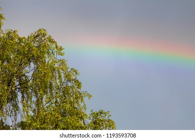 Rainbow and birch tree after rain sunlight